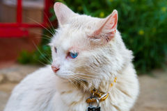 White Street Cat Royalty Free Stock Photography