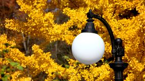 White street lamp against the background of yellow foliage royalty free stock image