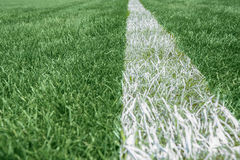 White stripe on the green grass, Football Stadium Stock Images