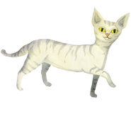White striped cat Stock Photo