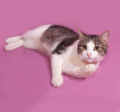 White and striped kitten plays on pink Stock Photos