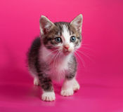 White with striped kitten standing on pink Royalty Free Stock Photo