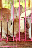 White striped rabbit in a cage. Royalty Free Stock Photography