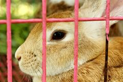 White striped rabbit in a cage. Stock Photo