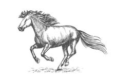 White strong horse galloping on sport races Royalty Free Stock Images