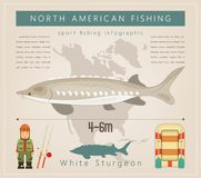 White Sturgeon Stock Photography