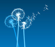 White stylized dandelions in the wind. Stylized dandelions on blue background Royalty Free Stock Photos