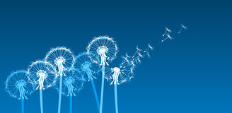 White stylized dandelions in the wind. Stylized dandelions on blue background Stock Photos