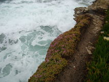 White surf with pink ice plant rocky cliff Royalty Free Stock Photography