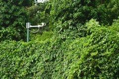 White surveillance camera hidden in green luxury plants. White surveillance camera hidden in green lush plants Stock Photo