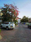 White SUV near blossoming kapok tree Stock Photo