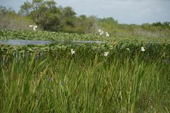 wild swamp flowers and plants stock images