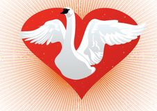White Swan on the background of the heart Stock Photo
