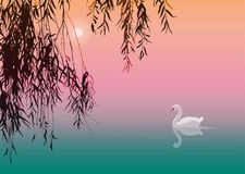 White Swan. Background with white swan and willow branches, vector illustration Royalty Free Stock Photos
