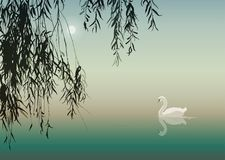 White Swan. Background with white swan and willow branches, vector illustration Royalty Free Stock Photo