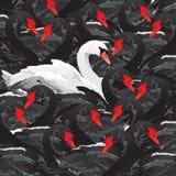 White swan in black family Stock Photos