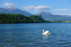 White Swan, Bled lake, Bled, Slovenia, Europe Royalty Free Stock Images