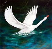 The white Swan on the dark water. Oil painting. The white Swan on the dark water Royalty Free Stock Photo