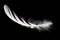 White swan feather isolated. Over black background Royalty Free Stock Photo