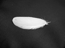 White swan feather Royalty Free Stock Photography