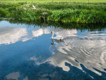 White Swan Floating on Cloud 9. Image of a Mute Swan swimming through a reflection of a large white cloud Stock Photos