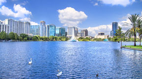 White swan at Lake Eola, Orlando Florida Royalty Free Stock Photography