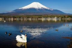 White swan at lake yamanaka with Fuji. White swan floating on Yamanaka lake with Mount Fuji view, Yamanashi, Japan. Here, 1 of 5 Mt. Fuji lakes, is the closest royalty free stock photos