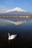 White Swan and Mt Fuji Royalty Free Stock Image