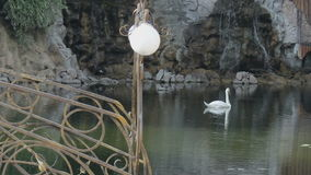 White Swan in a pond stock video