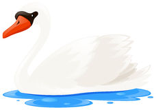 White swan in the pool. Illustration Royalty Free Stock Photo