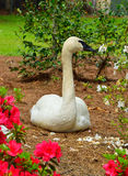 White Swan posing for a portrait Royalty Free Stock Photography