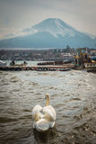 White swan swimming in pond with Mt.Fuji Stock Photography
