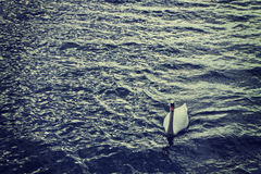 White swan swimming on sea waters Stock Photos