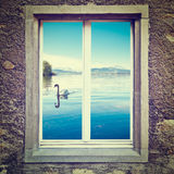 White Swan. View of White Swan  through the Window, Instagram Effect Stock Image