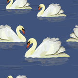 White swan in the water. Vector illustration of watercolor white swan in the water. Seamless pattern Stock Photos