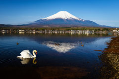Swan at Yamanaka lake and mt. Fuji Royalty Free Stock Photo