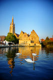 White swans in Bruges canal Royalty Free Stock Photo