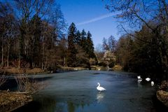 White swans on lake Stock Photography