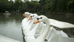 White swans in pond Stock Photo