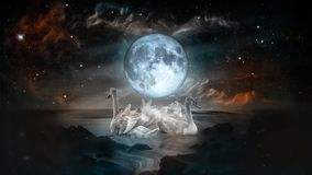 White swans under the fool moon