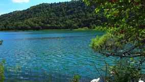 White swans on the water. Panoramic shot of waterfall on Krka river-Croatia stock video