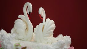 White swans on a wedding cake. stock video
