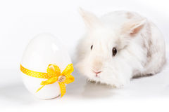 White sweet rabbit. White bunny wiht a easter egg with a yellow loop Royalty Free Stock Photography