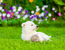 White Swiss Shepherd`s puppy hugging kitten on green grass Stock Photo