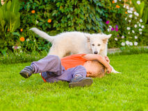 White Swiss Shepherd`s puppy and kid playing together on green grass Royalty Free Stock Image