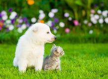 White Swiss Shepherd`s puppy and kitten sitting in profile on green grass.  Stock Photo