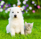 White Swiss Shepherd`s puppy and kitten sitting together on green grass.  Stock Images