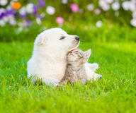 White Swiss Shepherd`s puppy lying with kitten on green grass Royalty Free Stock Photography