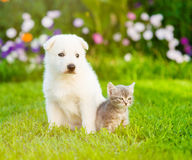 White Swiss Shepherd`s puppy sitting with tiny kitten on green grass Royalty Free Stock Images