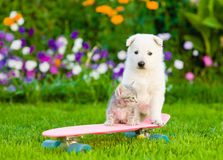 White Swiss Shepherd`s puppy and tabby kitten on skateboard Stock Image